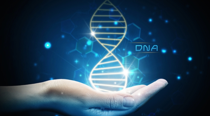 A Longer Life May Lie in Number of Anti-Inflammatory Genes