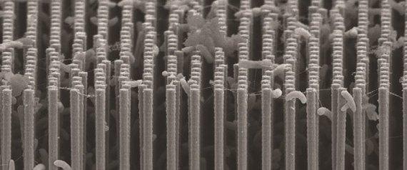 Artificial Photosynthesis Advance Hailed As Major Breakthrough
