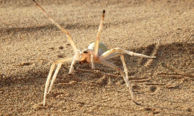 Cartwheeling Spider, Corpse-Hoarding Wasp Among Bizarre New Species