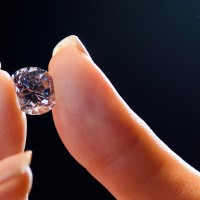Geologist Discovers Plant That May Only Grow On Top Of Diamonds