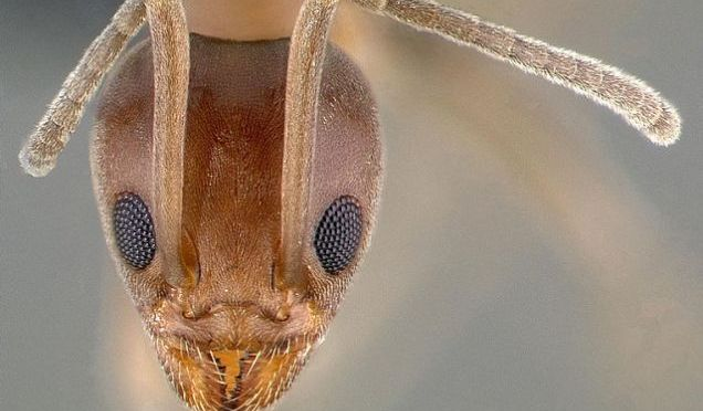 These Ants Took Over The World, And We Just Noticed