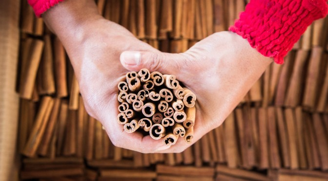 Capturing the Cinnamon Harvest in Sumatra