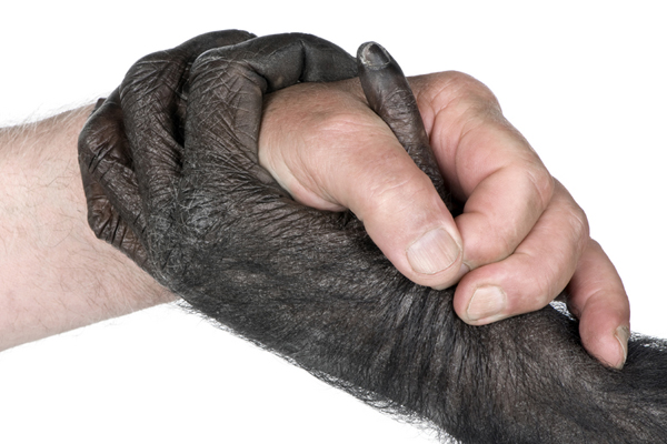 Human Hands Are Primitive, New Study Finds