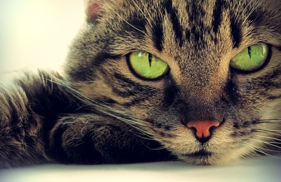 Why Cats Have Vertical Pupils