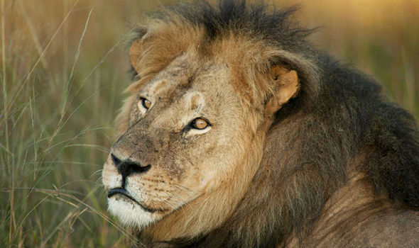 The Staggering Amounts Americans Pay To Kill Exotic Animals