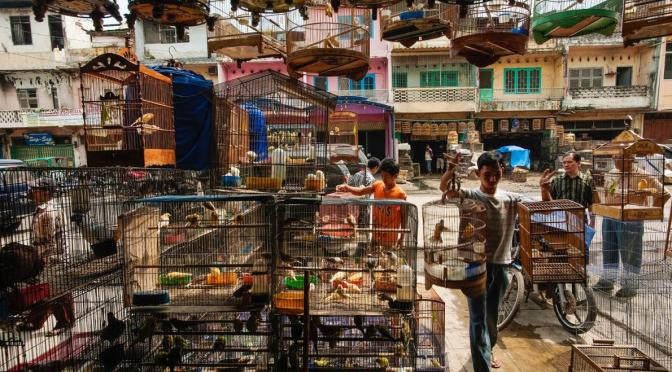 Booming Bird Markets Put Songbirds at Risk