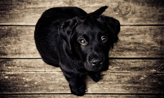 7 Human Foods That Could Make Your Pet Sick (It's Not Just Chocolate)
