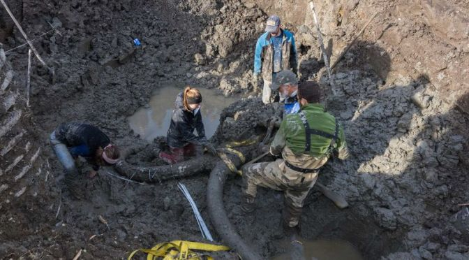 Michigan Farmer Uncovers Rare, Near-Complete Woolly Mammoth Fossil In Field