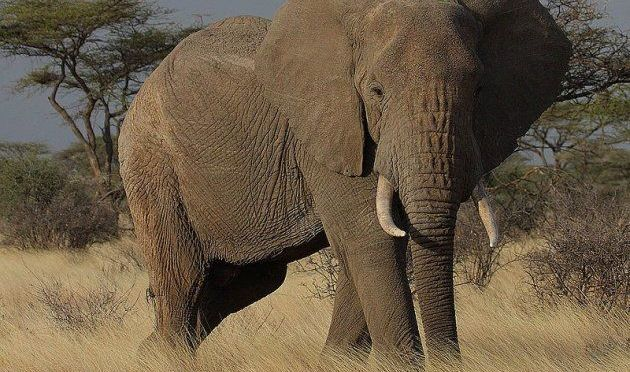 Four African Rangers Killed by Poachers in Fight to Protect Elephants