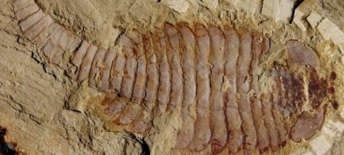 Scientists Have Found Fossilized Brains
