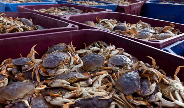 Contaminated Crab Might Be 'New Normal' With Climate Change