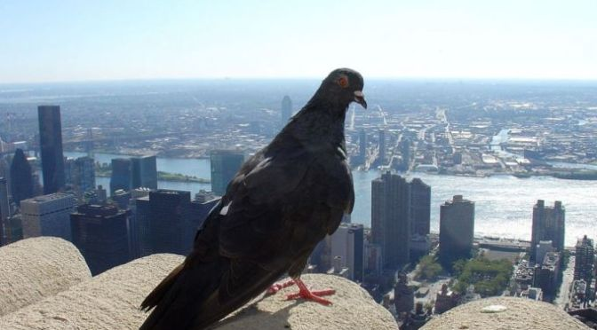 Pigeons Can Learn to Detect Cancer in Humans