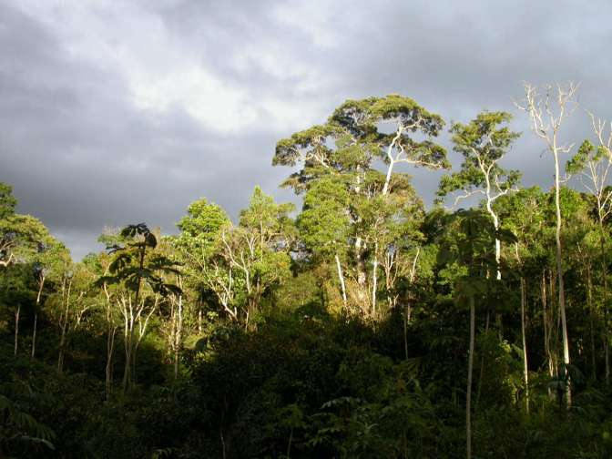 OVER HALF OF ALL AMAZONIAN TREE SPECIES ARE IN DANGER