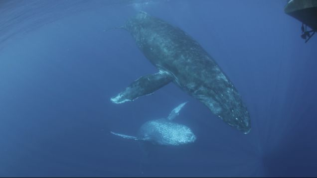 We've Never Heard Whales Make This Haunting Sound Before