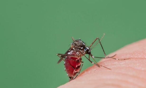 New Zika Virus Cases Confirmed in the U.K.
