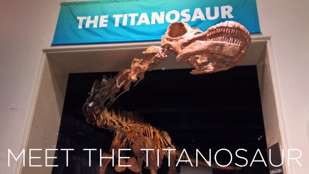 Here's Your Best Look at the World's Largest Dinosaur Skeleton