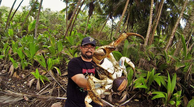 Fearless Australian Poses With Massive Coconut Crab