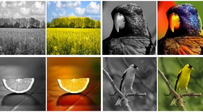 This Software Creates Vivid Color Pictures From Black-and-White Photos