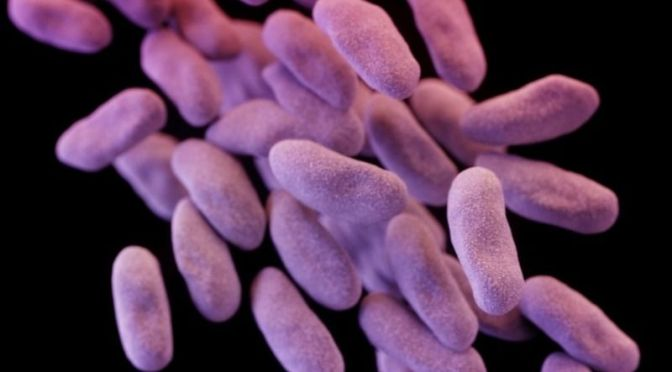 That Scary Antibiotic-Resistant Superbug Is Now In The US