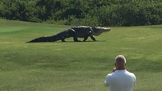 Monster Alligator In Florida Looks Like Something From 'Jurassic Park'