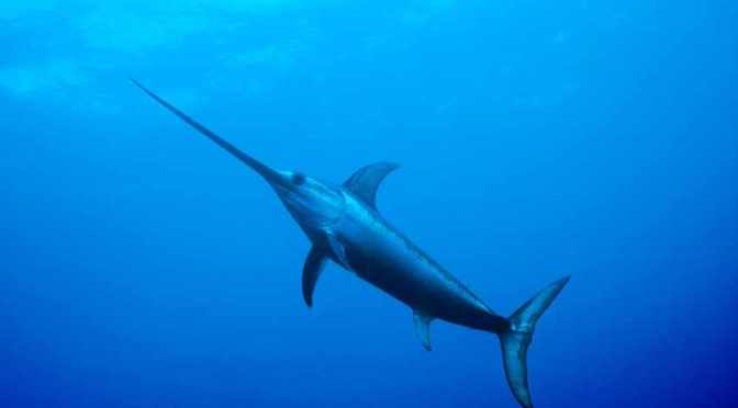 Natural Lube Powers One of the World's Fastest Fish