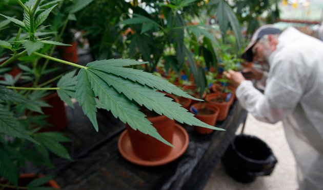 U.S. Won't Reschedule Marijuana, But Will Open Up Research Opportunities