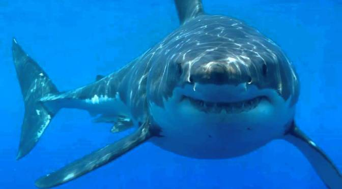Florida Beach Suffers 3 Shark Attacks in Less Than 3 Hours
