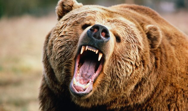 Man Gets Attacked Twice By Grizzly Bear, Films Video Of Himself Covered In Blood