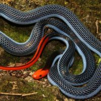 The Venom From This Snake Will Make Your Life a Living Hell