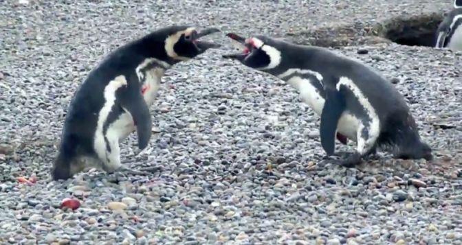 Penguin's Insane Revenge Fight Is The Horror Movie Of The Year