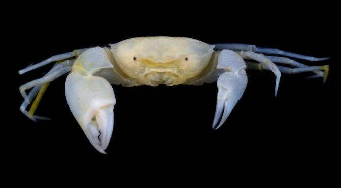 NEW 'HARRY POTTER' CRAB SPECIES CASTS A SPELL