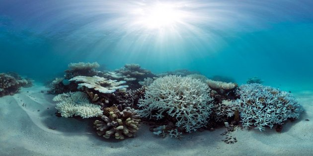 World's Coral Reefs Are Headed For Major Die-Off