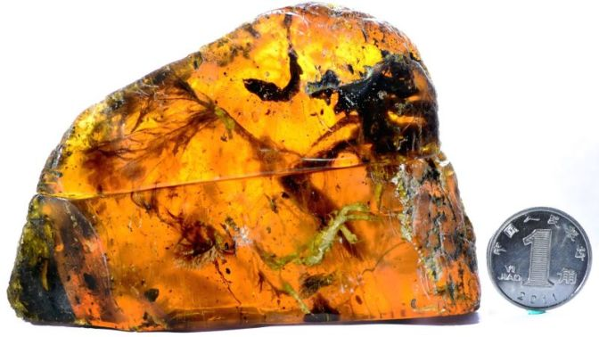 Scientists Find 100 Million-Year-Old, Nearly Complete Baby Bird Trapped in Amber