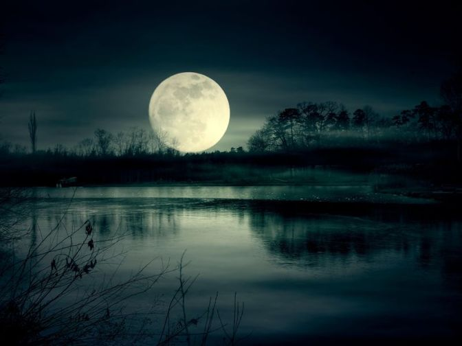 How Moonlight Sets Nature's Rhythms