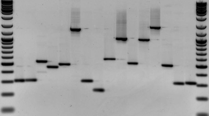 Should Access to Your Own DNA Be Treated as a Civil Right?