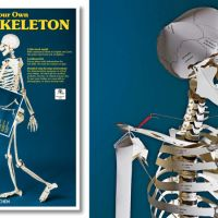 A Textbook That Turns Into a Lifesize Paper Skeleton Should be Standard at Med Schools