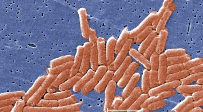 Unusual forms of 'nightmare' antibiotic-resistant bacteria detected in 27 states