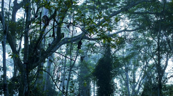 The World's Second-Largest Rainforest Is Losing the Carbon It's Held for a Thousand Years