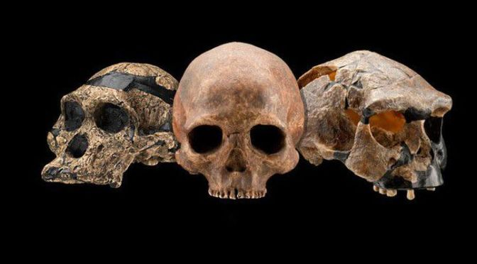 These are the Decade's Biggest Discoveries in Human Evolution