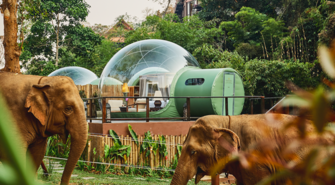 SLEEP AMONG ELEPHANTS IN THE 'JUNGLE BUBBLE' SUITES OF THAILAND