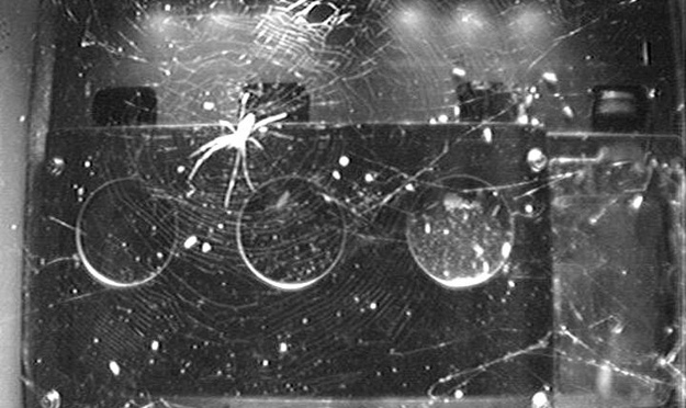 Space Station Spiders Found a Hack to Build Webs Without Gravity