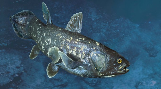 Huge Fish, Once Believed Extinct, Isn't the 'Living Fossil' Scientists Thought